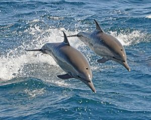 Interesting and Amazing facts about Dolphins