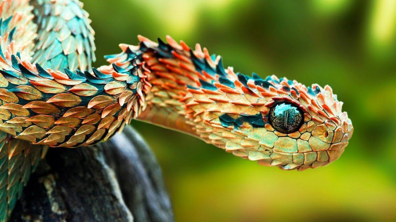 Strange facts about Snake